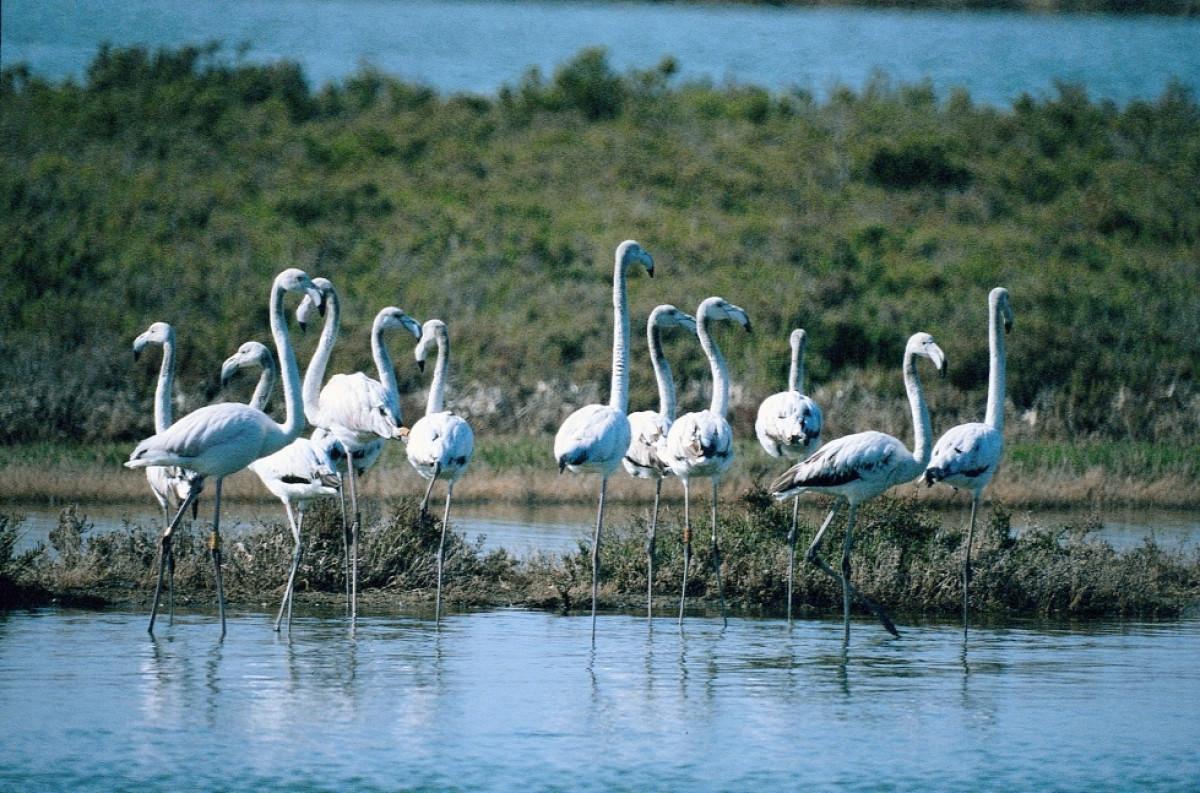Naturaleza en el Algarve   Flamencos   Turismo do Algarve