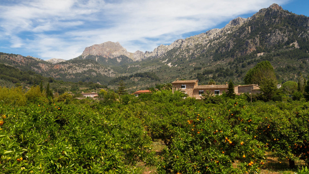 Mallorca valle de los naranjos