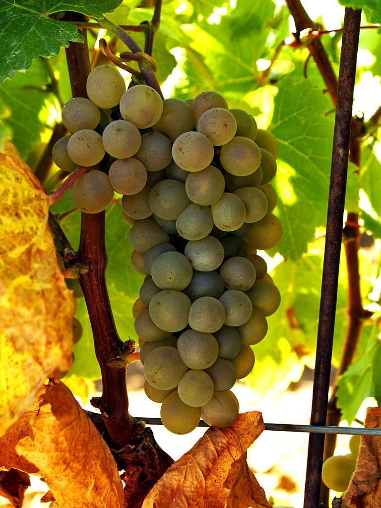 Ruta del Vino de Rueda09