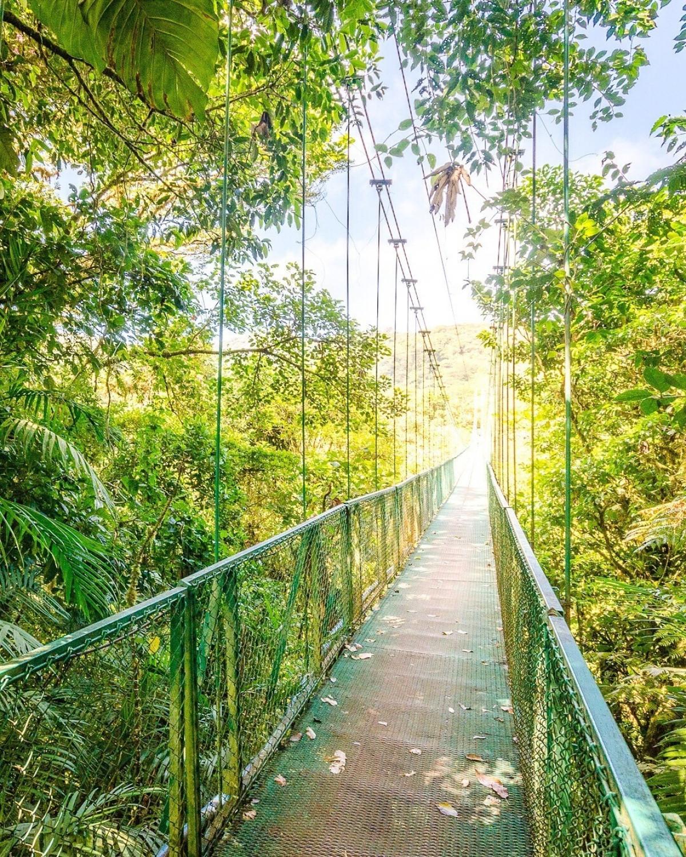 Costa Rica, Monteverde 1350