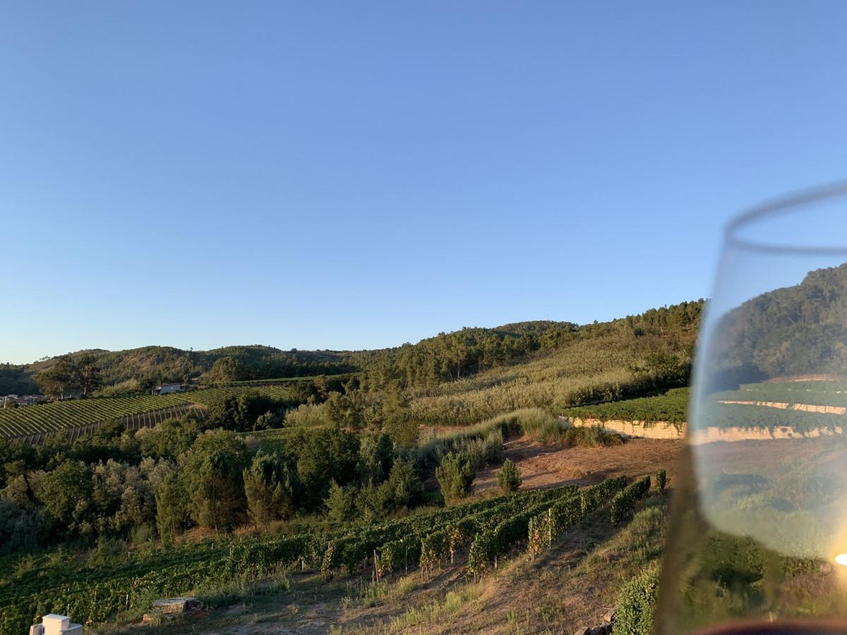 Paisaje de los Viu00f1edos del Ribeiro desde el Mirador del mUseo del Vino de Galicia IMG 4838