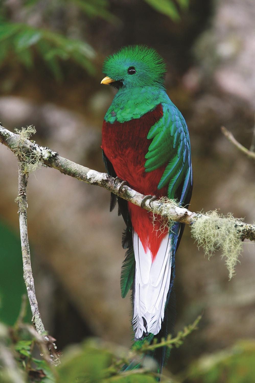 Quetzal 1500 a