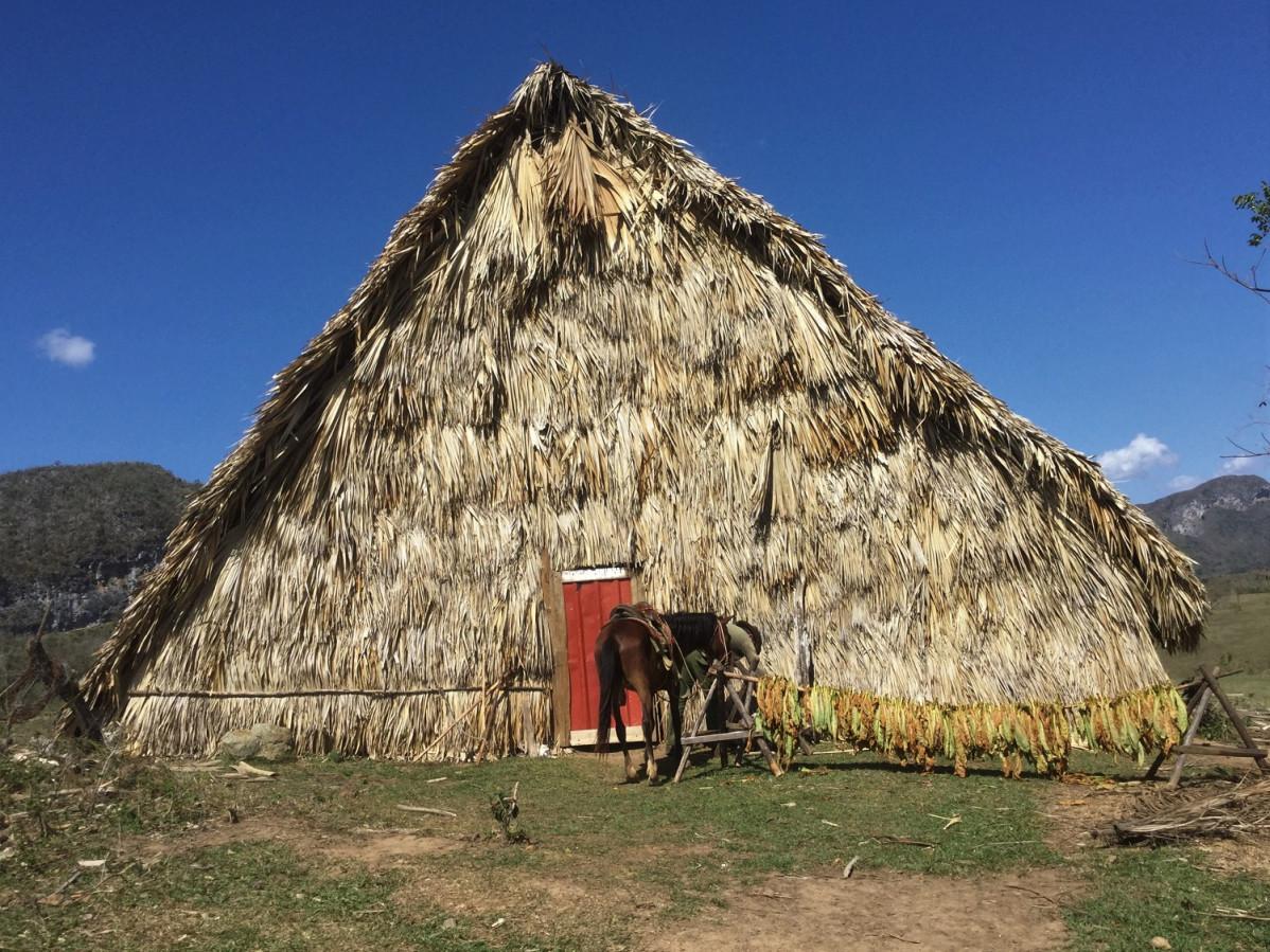 Viu00f1ales   Las cabau00f1as, que hacen de secadero de la hoja de la planta del tabaco, es una escena habitual en los campos del valle.  1499 Miu00f1a IMG 2333