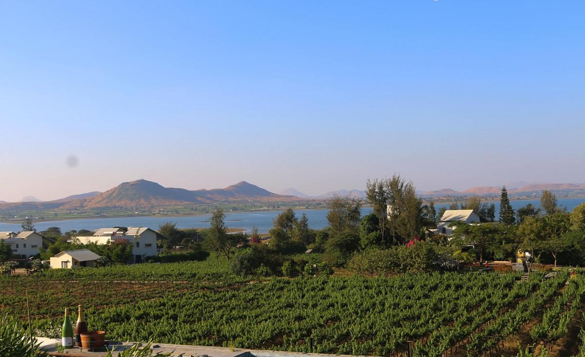 Soma vineyard view 1600
