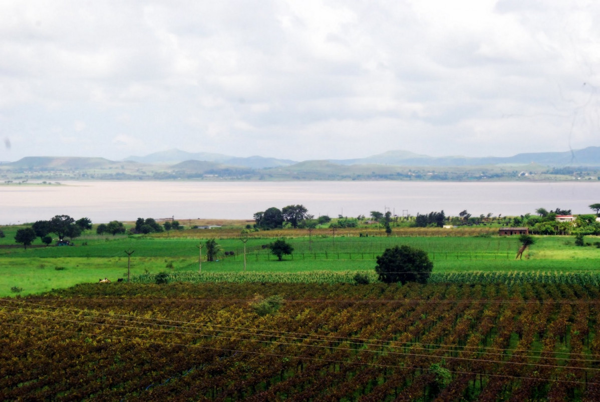 York Winery Nashik 1500