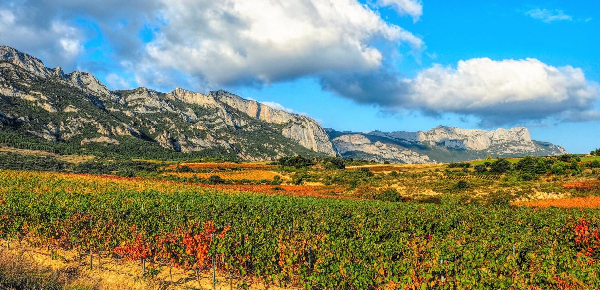 Sierra de Tolou00f1o Cantabria, al sur de Alava. Viu00f1edos 2018